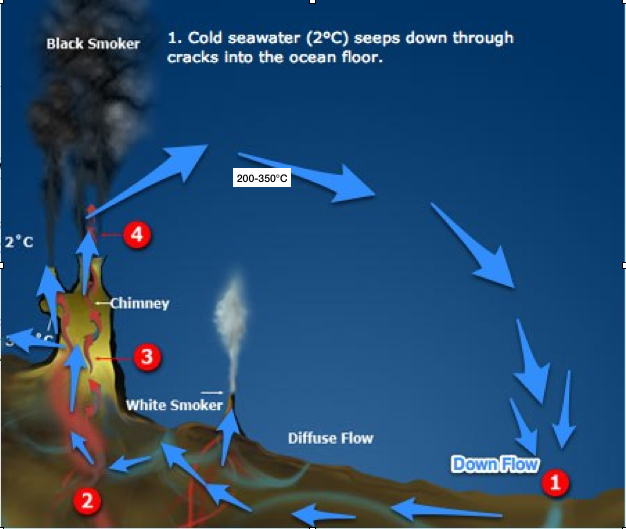 chemosynthesis hydrothermal vent life Despite an environment that humans would find deadly, life thrives around hydrothermal vents on the seafloor hydrothermal vents are areas microbial communities that live around the vents can convert the minerals and chemicals in the water into energy through a process called chemosynthesis these microbes then.